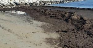 Il materiale lungo la spiaggia sud