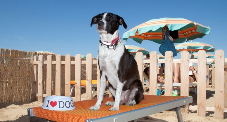 Spiagge pet friendly riconfermate a Montesilvano
